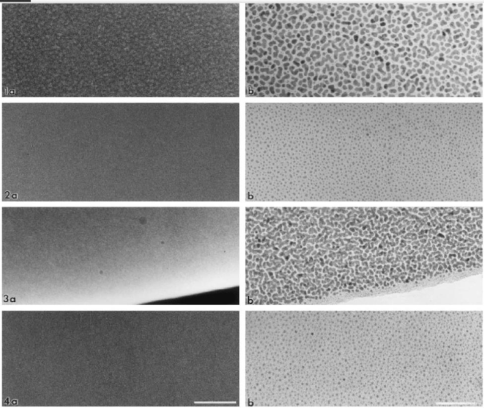 تصاویر لایه نازک طلا/ پالادیوم با شرایط مختلف بر روی نمونه ها با میکروسکوپ های SEM، FE-SEM و TEM